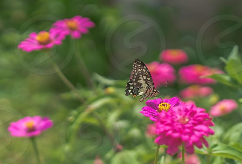 Butterfly in a flower garden. photo