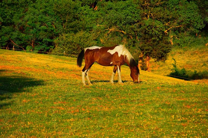 brown and white pony in a field photo