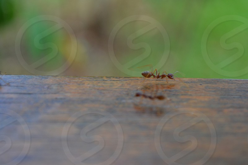 ant jungle reflection wood insect Borneo Sepilok forest Philippines macro green wooden legs body day sun light wildlife life photo