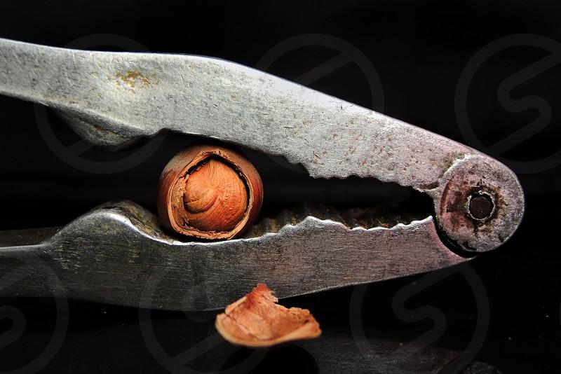 metal nut cracker with hazelnut inside photo