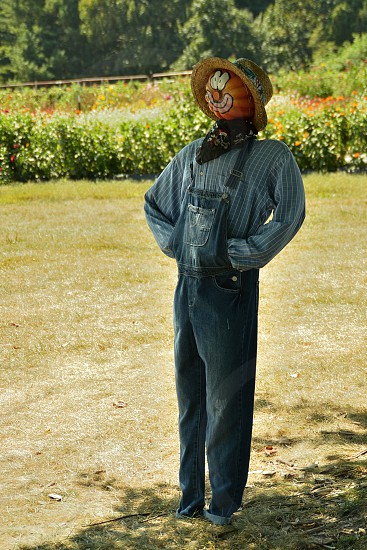 Scarecrow guarding the harvest photo