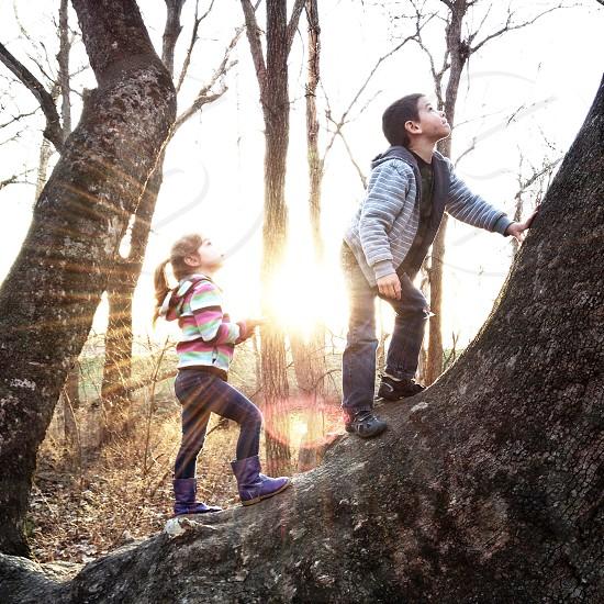 Kids hike family trees sun flare photo