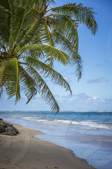 view of palm tree beside the beach photo