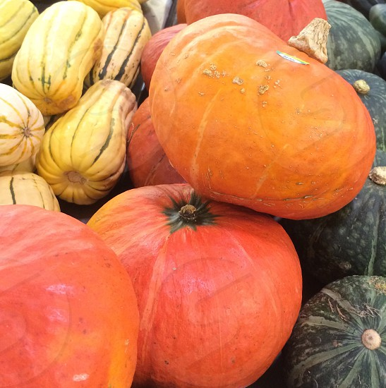 orange green and white squash photo