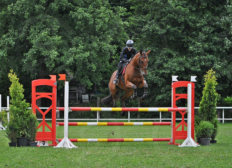 Horse riding competition photo