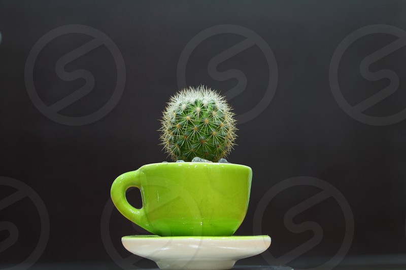 Green cup cactus plant photo