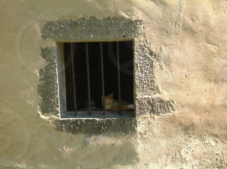 kitty in the window Tuscany photo