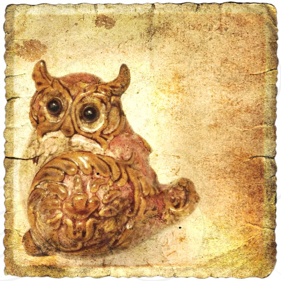 Little brown owl vintage style photo