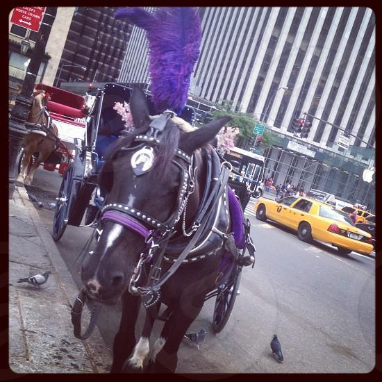 New York City street view Manhattan Horse photo
