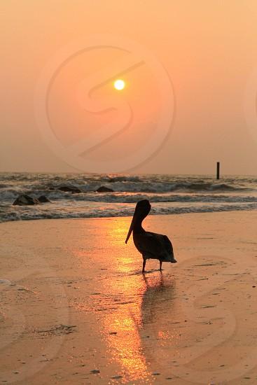 Morning walk on the beach photo