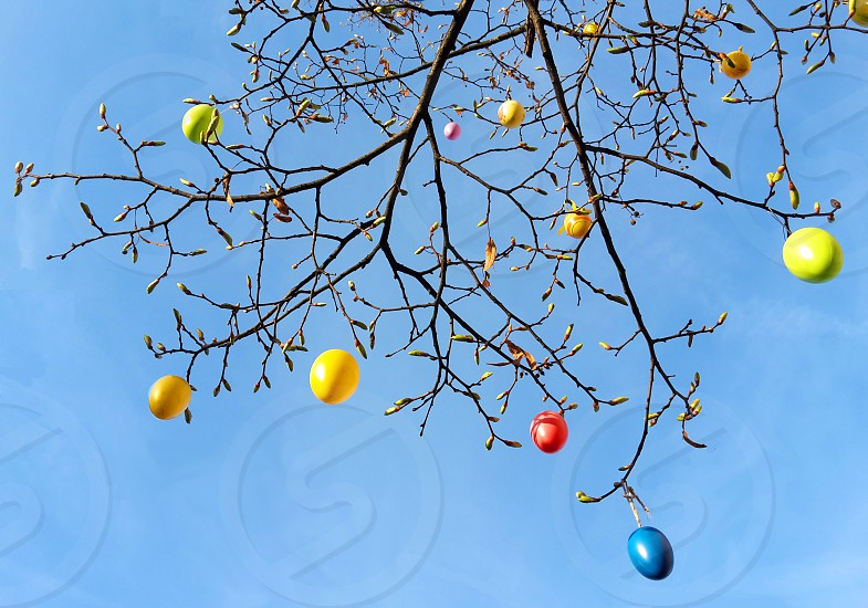 colorful Easter eggs on a tree.  sunshine. sunlight. sky. blue. springtime. easter. eggs. decoration. blue. clear. copy space. negative space. neg space. multi colored photo