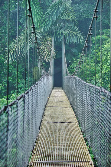 Rainforest hanging bridges bridge photo