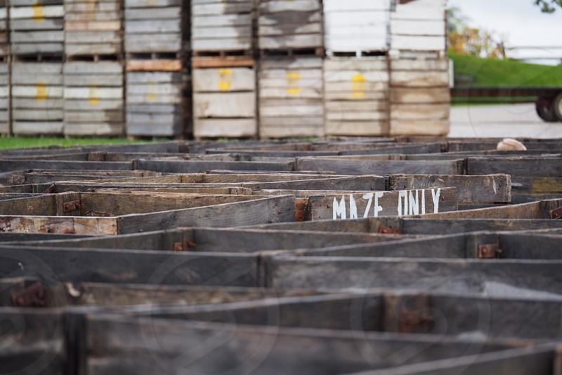 Maze. Labyrinth. photo
