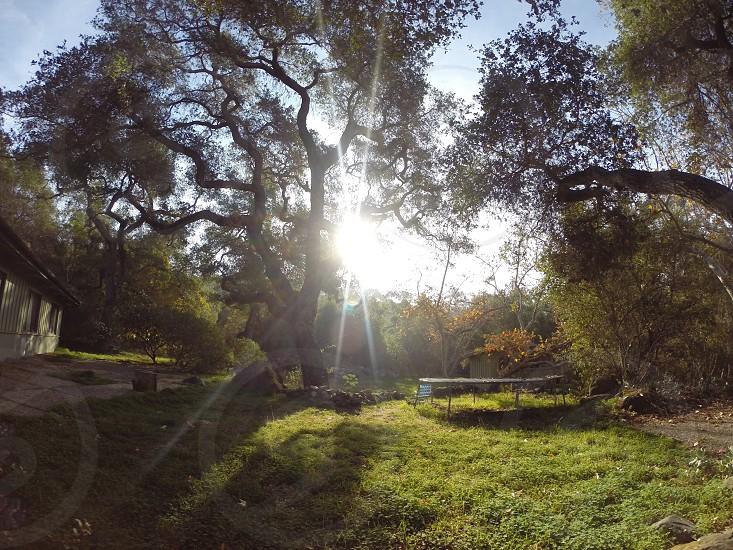 Oak trees trampolines and sun rays welcoming the new day. Backyard magic.  photo