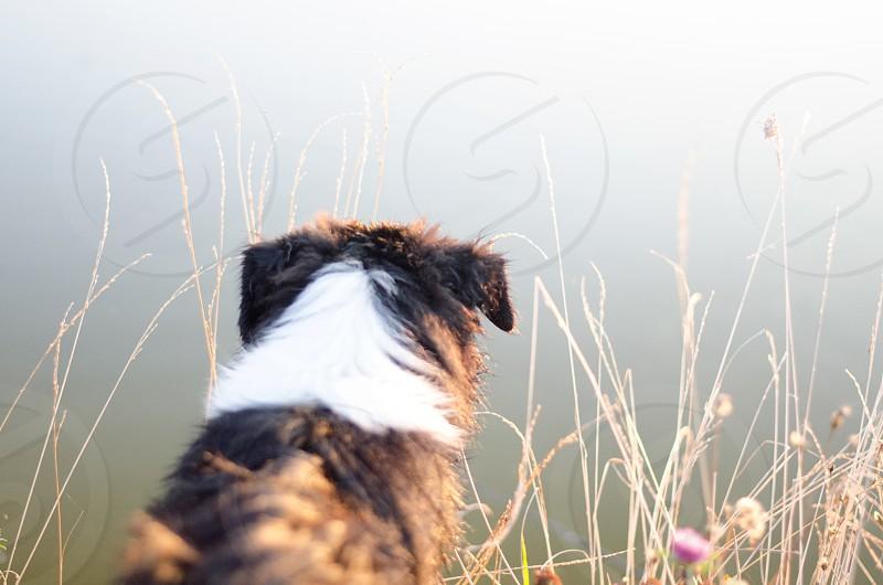 Dog looking through fog sunlight sunrise countryside light and bright summertime  photo