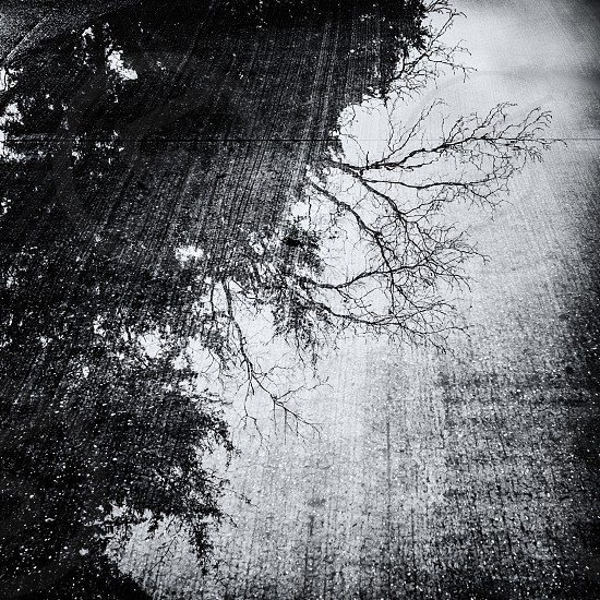 black tree photography photo