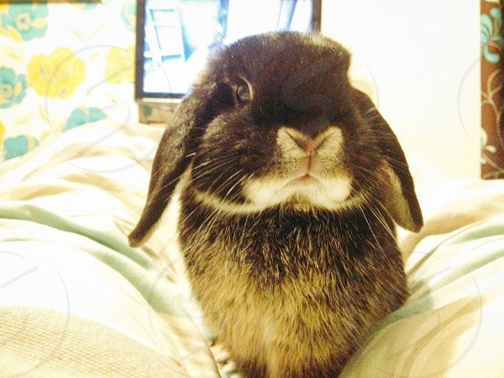 My rabbit pipkin  photo