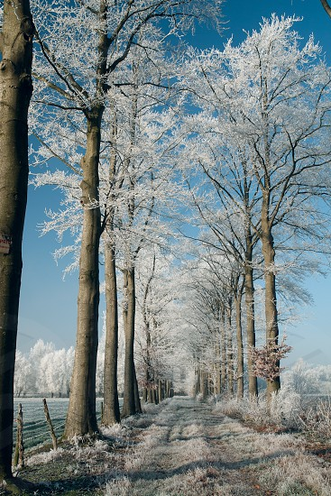 rural road path snow trees rime frost blue white photo