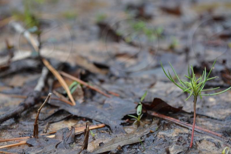 Plant Dark leaves Wet photo