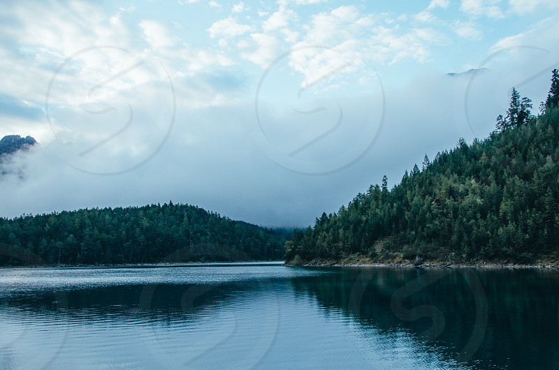 pine forest next to lake photo