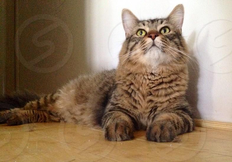 Pretty kitty photo