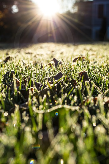 frosted grass on a sunny morning macro photo