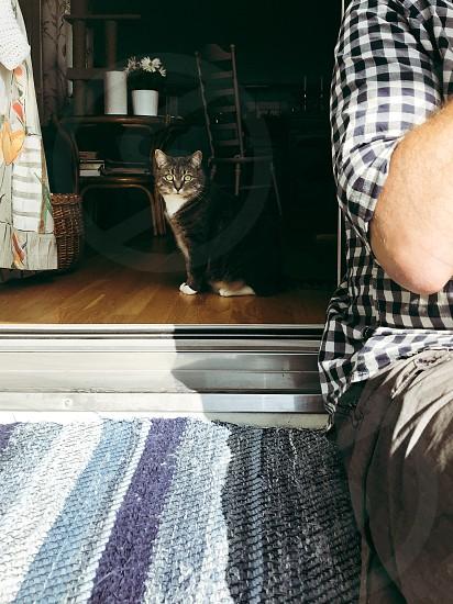 Life as a rental apartment  indoors balcony  human cat pet rent flat person unrecognized person unrecognizable person body part kitten photo