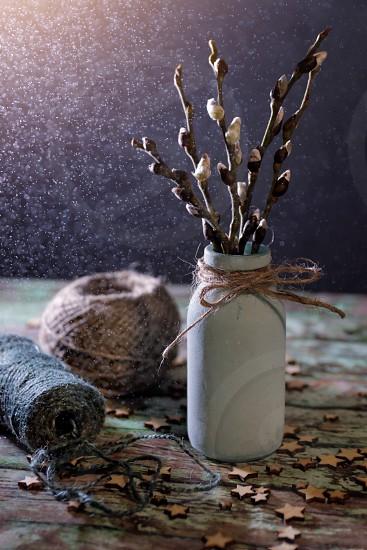 Branch willow spring vase still life vintage photo