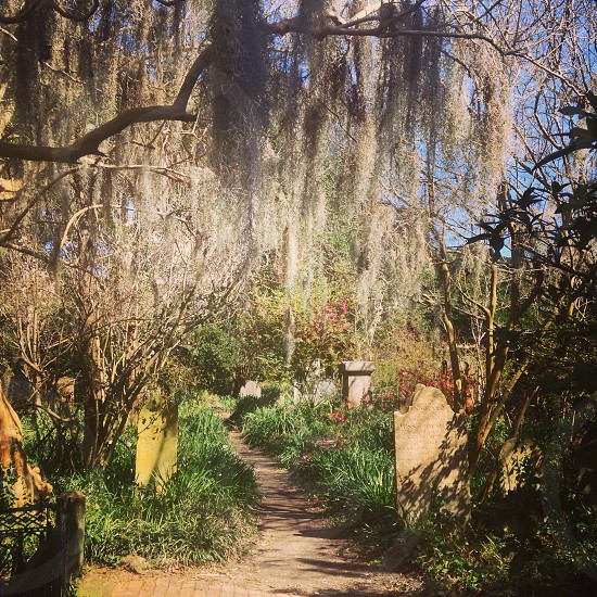 weeping willow tree on soil path photography photo