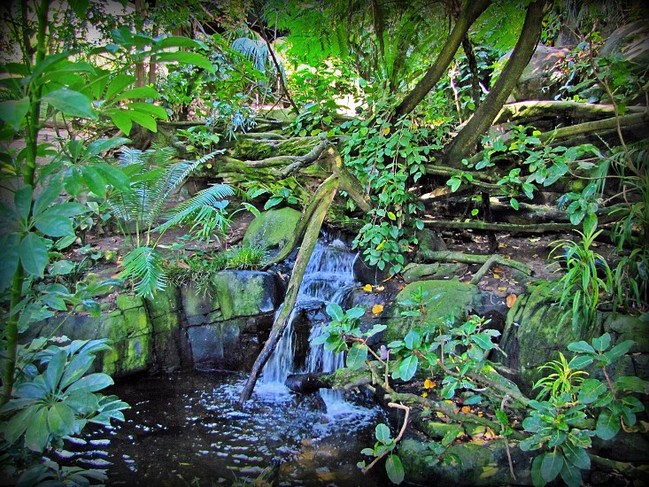 mini water falls surrounded with green plants photo