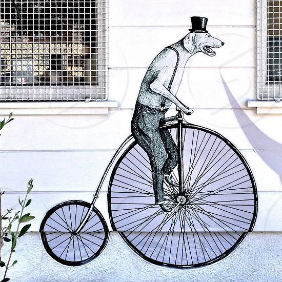 dog riding bicycle sketch photo