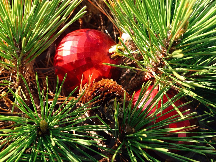 red ball ornament on green christmas tree photo