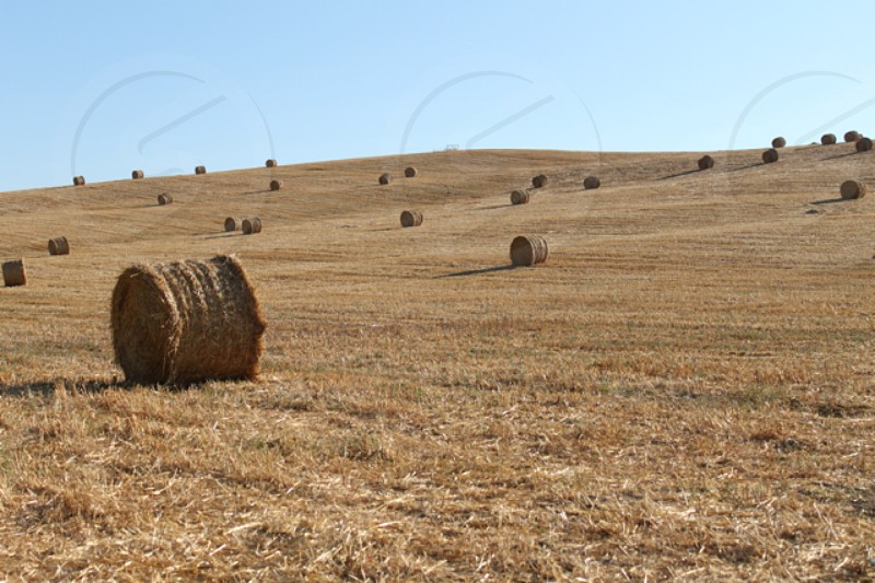 brown rolled grass field photo