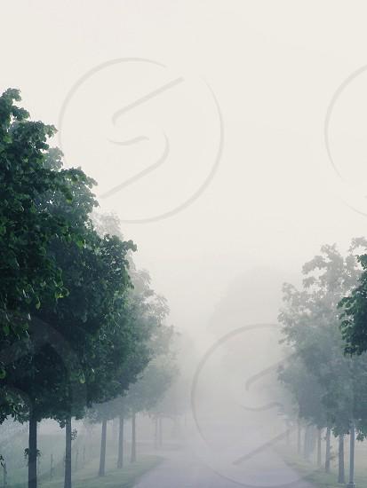 #nature #minimal #minimalistic #simplicity #fog #foggy #trees photo