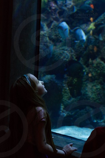 girl wearing short-sleeved shirt looking on aquarium tank photo