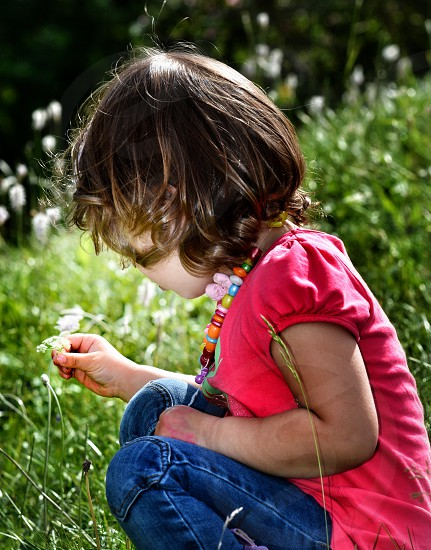 Picking flowers on a summer day summer flowers girl child nature sun  photo