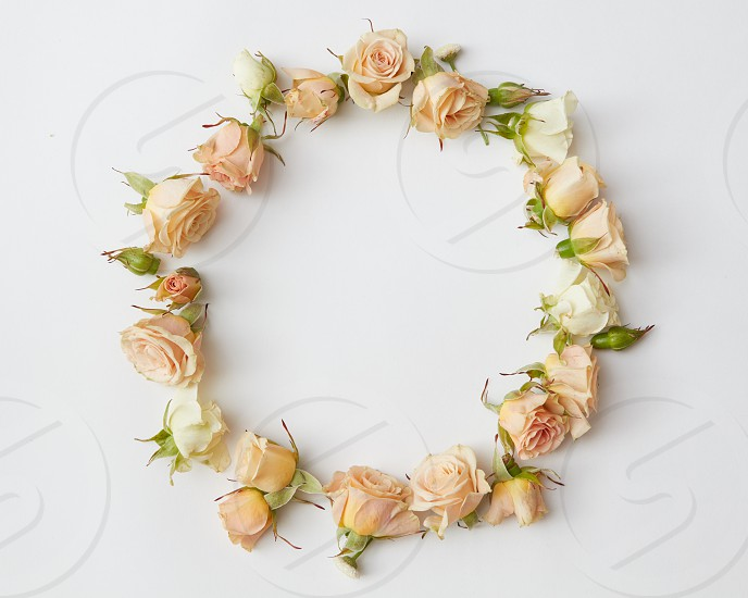 rame of rosebuds and leaves isolated on a white background overhead view. Flat lay photo
