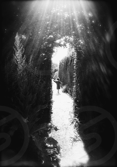 Street photography park hedges hedge garden child holding hands light pathway backlight summer photo