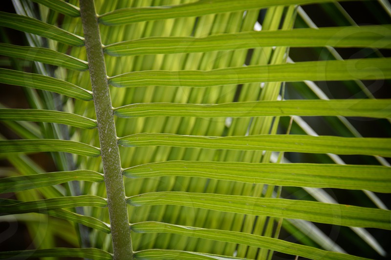 Green plant repeating pattern Palm leaf leaves photo