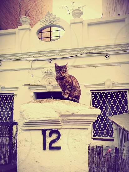 Barcelona cat building number twelve 12 animal city moment streetshot photo