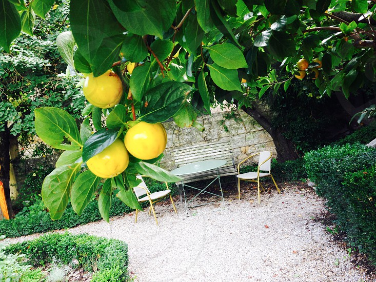 yellow round fruit tree near brown wooden framed white chair and round folding table during daytime photo