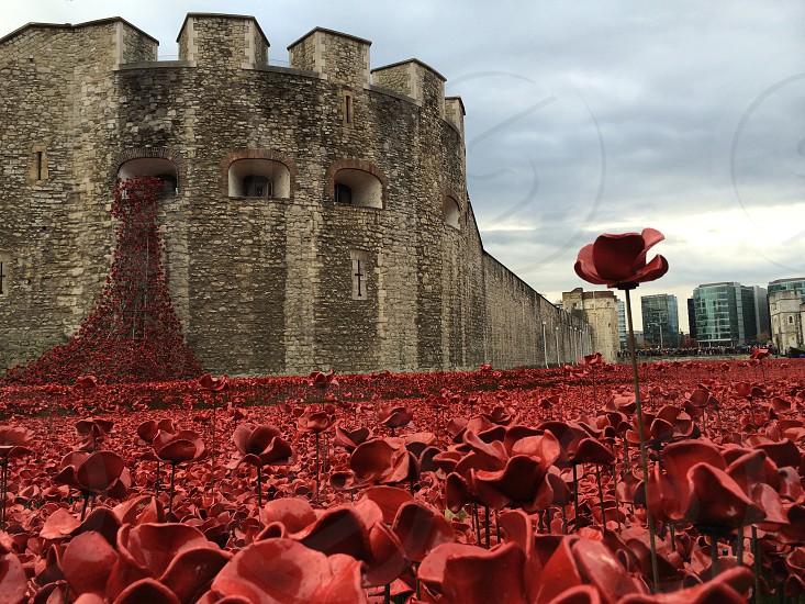 Armistice day photo