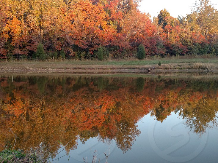 Fall colors on the pond photo