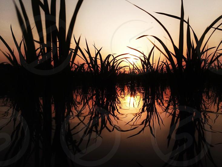 Rice paddy.  photo