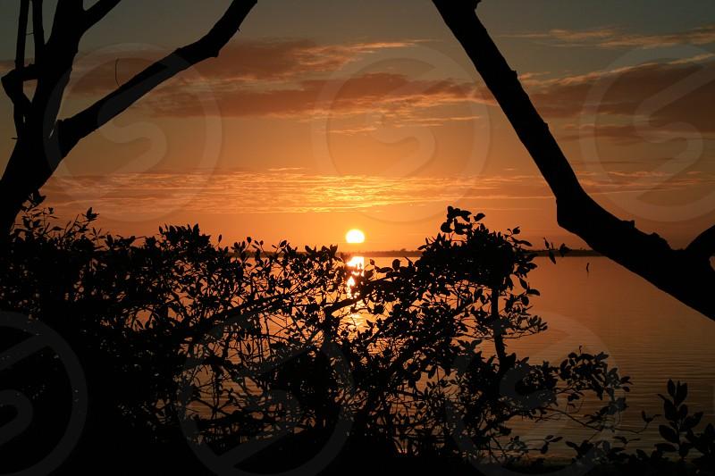 Sunset island clouds tree branches water sky reflection horizon coastal beach sand sun photo