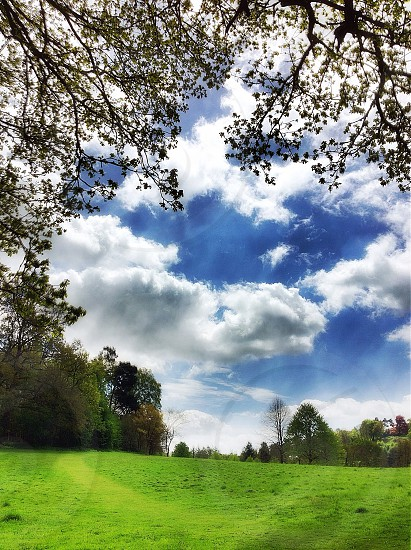 trees with cumulus clouds photography  photo