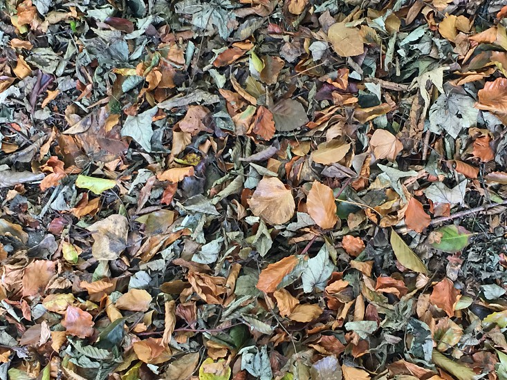 Leaves fall Autumn photo