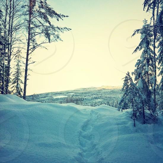 trees on white snow photo