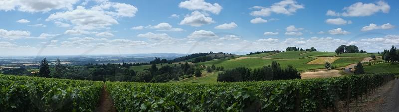 Oregon Wine Country Panorama photo