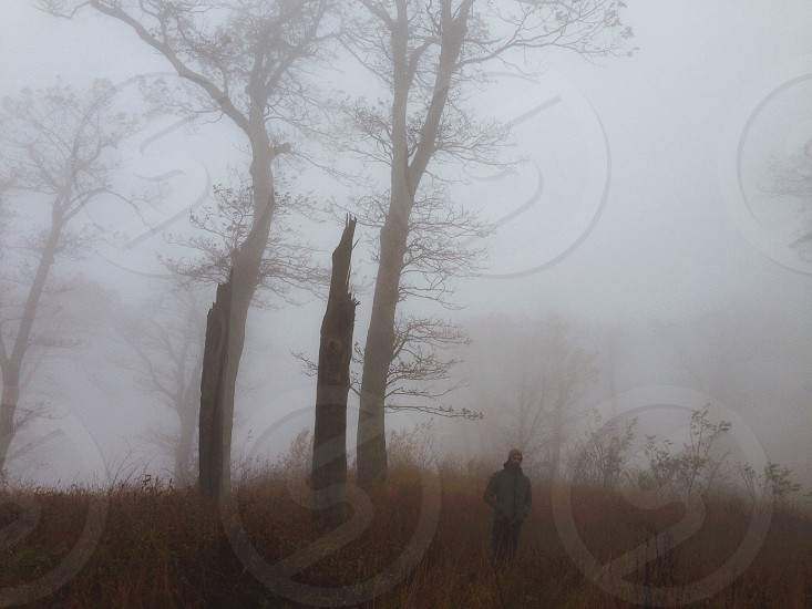 Blue Ridge Fog VA 2014 photo